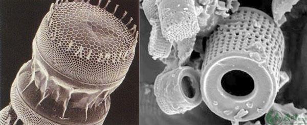 原叶硅藻泥能远销世界各地的秘密
